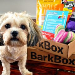 Why Everyone's Barking About BarkBox