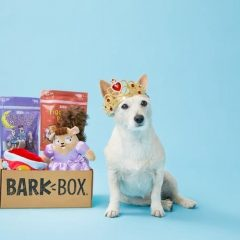 Finding The Perfect Dog Gifts