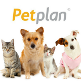 Pet Plan Insurance – Why Do You Need It?